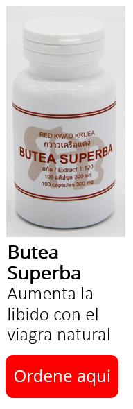 Banner Butea Superba ES ver.PNG