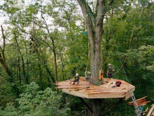 What's cooler than building a tiny house in a tree? Getting a TV show about it.