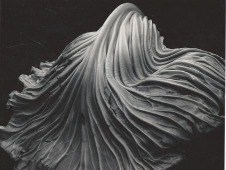 Los tesoros de Edward Weston