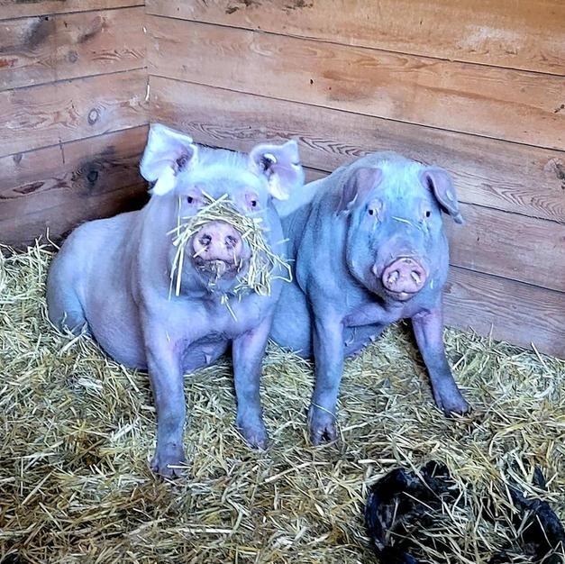 Bertha and Gertie