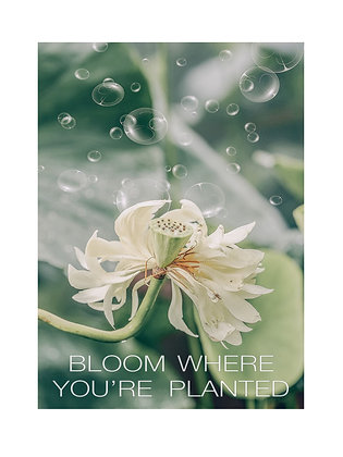 (Framed) Bloom where you're planted. (white flower)