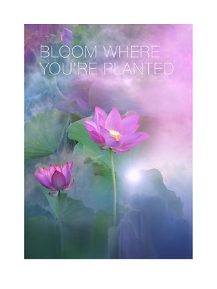 (Framed) Bloom where you're planted. (fuscia lotus)