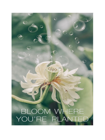 Bloom where you're planted, white w_bubb