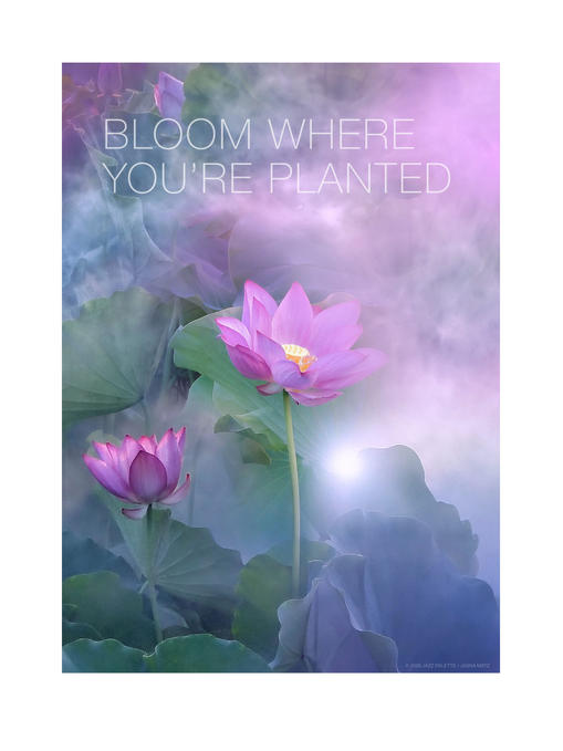 BLOOM WHERE YOU'RE PLANTED. (fuscia)