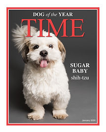 Powder, Dog of the Year 2020-Layout 1.jp