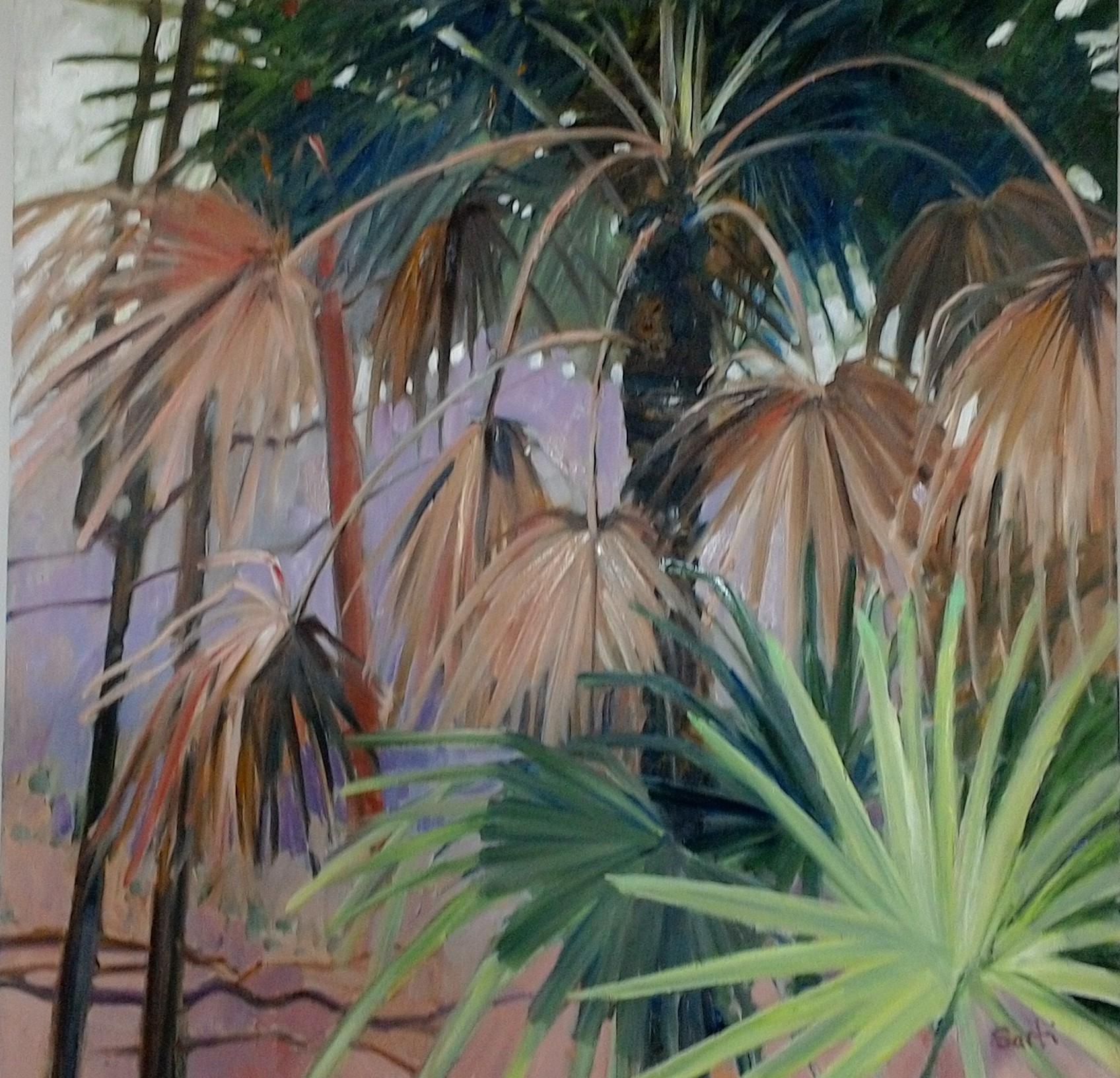 Cabage tree palms 70x70cm $750