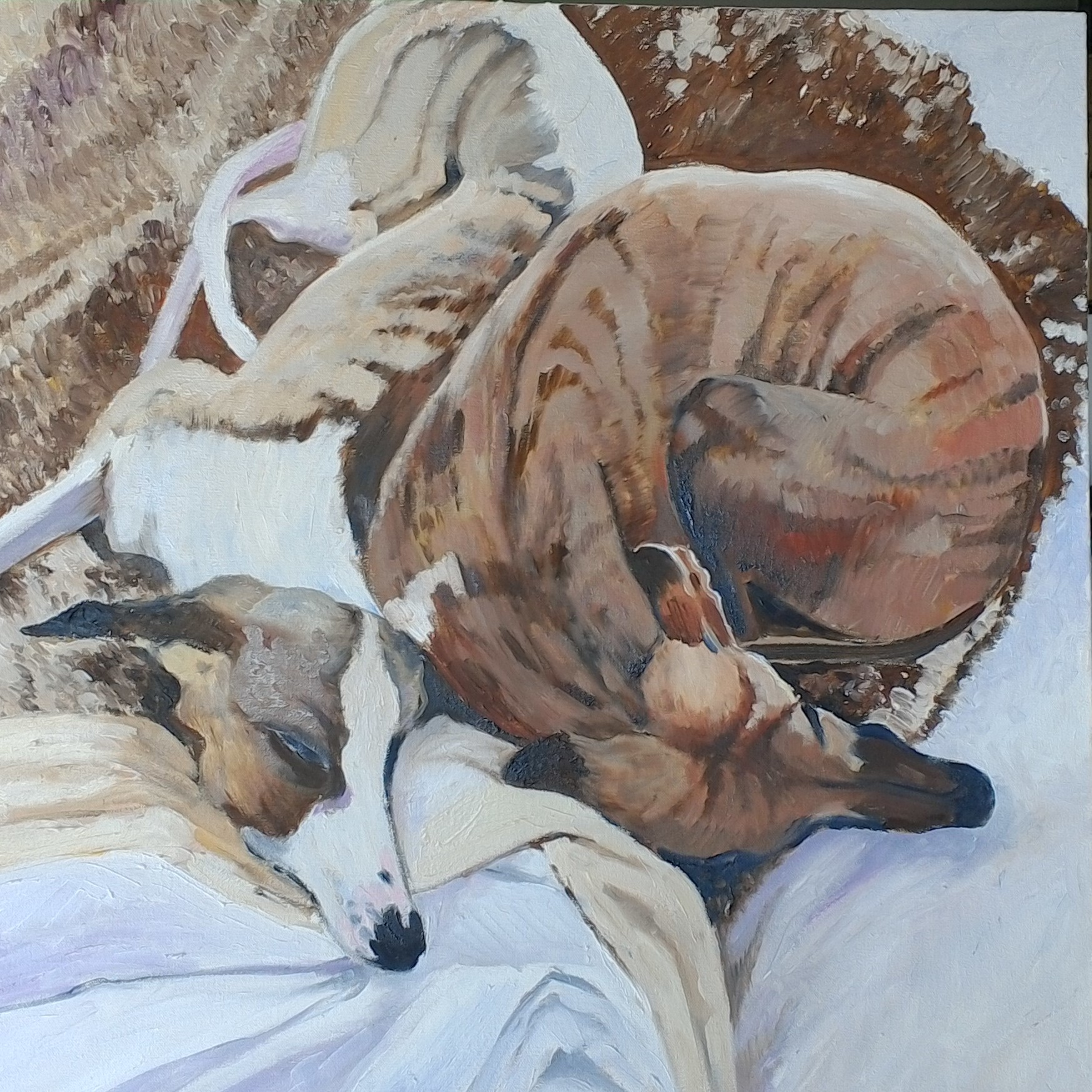 Whippets resting oil on canvas 54x54 $500