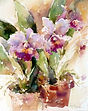 Orchid,-Orchids6 janet rogers.jpg