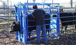 "Build a ""Bud Box"" to Make Livestock Handling and Loading a Breeze"