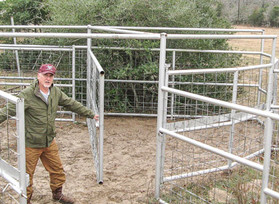 Safe Ways to Move Cattle