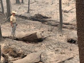 Devastating Losses After California Megafires
