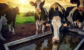 Is E.coli hiding in your water troughs?