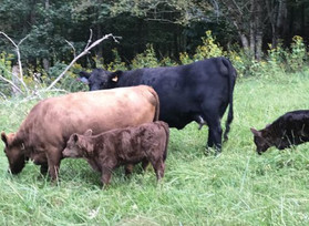 RANCHING LIKE AN ECONOMIST: IT'S ALL ABOUT THE SOIL
