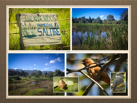 Exploring Bogotá's Urban Wetlands: Humedal Salitre