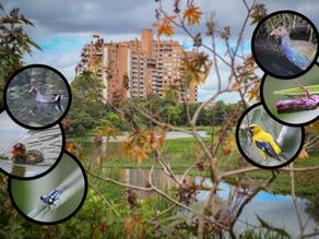 Exploring Bogotá's Urban Wetlands: Humedal de Córdoba, Sector 2