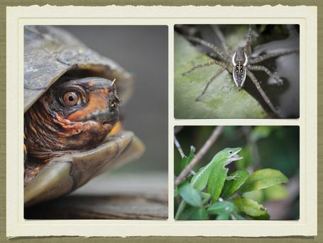 The Best of Nature at Houston's Arboretum