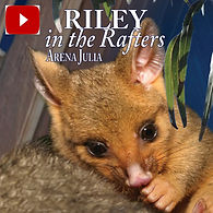 Riley cover youtube with author and titl