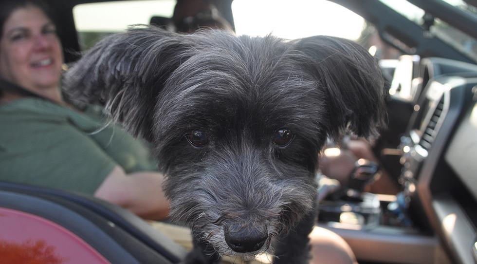 DSC_0643-puppy.jpg