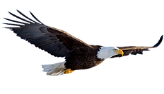 Flying-Eagle-Transparent-Background.png