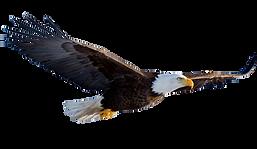 Flying-Eagle-Transparent-Background.png