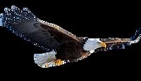 Flying-Eagle-Transparent-Background_edit