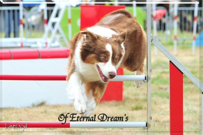 Of Eternal Dream's