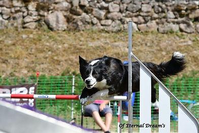chiens-Border-Collie-220e0cc7-a7fc-7cc4-