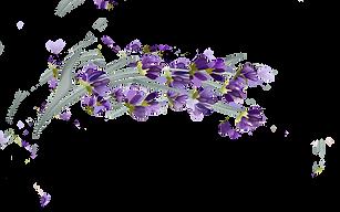 Logo lavendar-.png