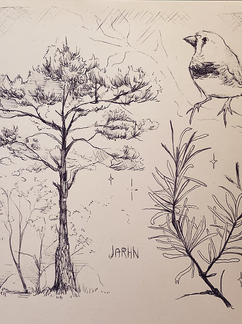 Forest Trees and Finch // Traditional Pen