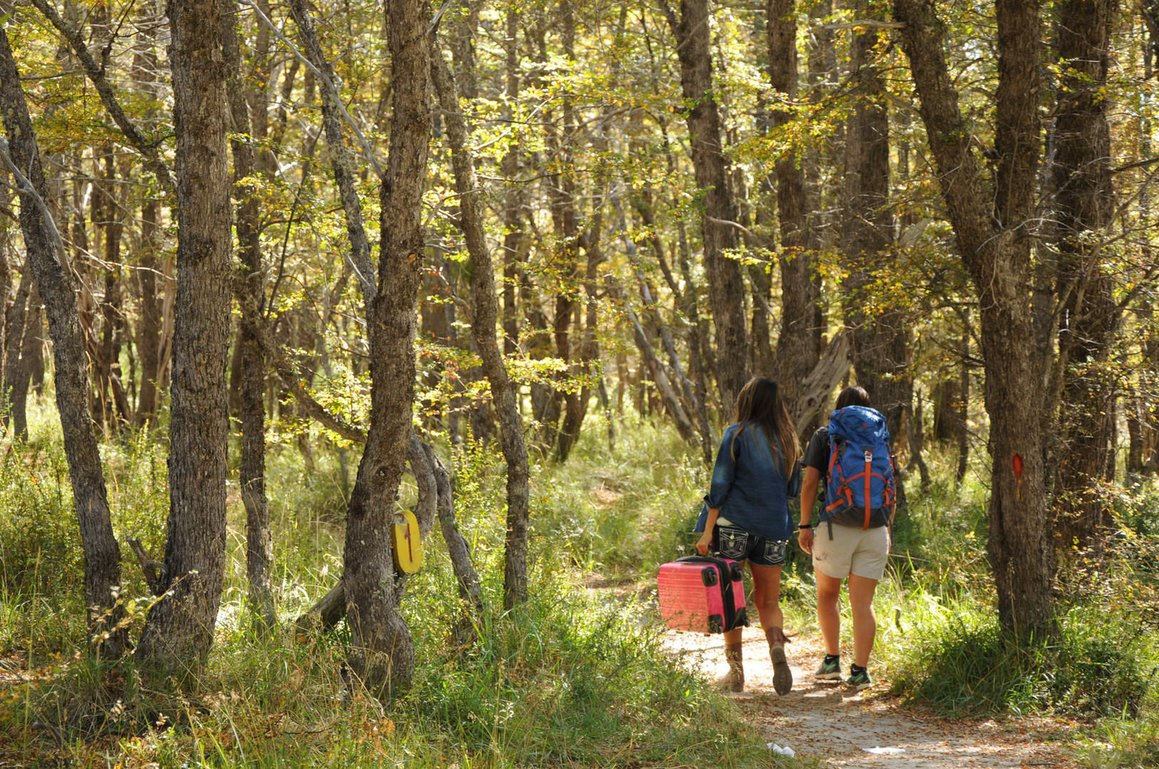 Trekking a la Cascada Ñivinco