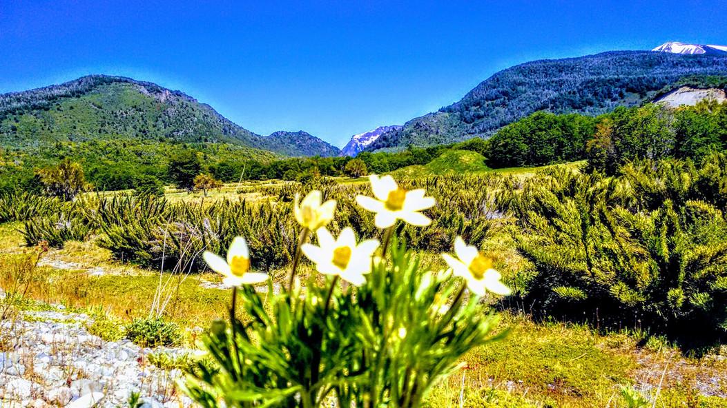 Primavera en Trevelin