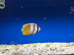 Saltwater Fish Pictures