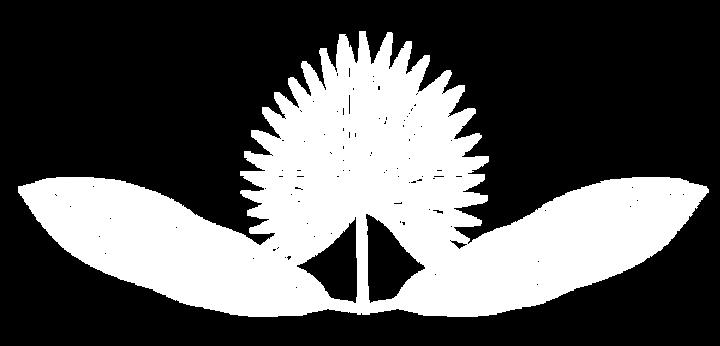 plant-white-bo-bg.png