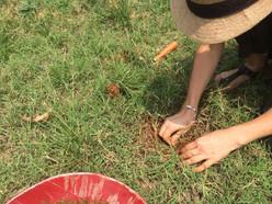 Soil testing at EcoFarm