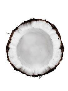 coconut white.jpg
