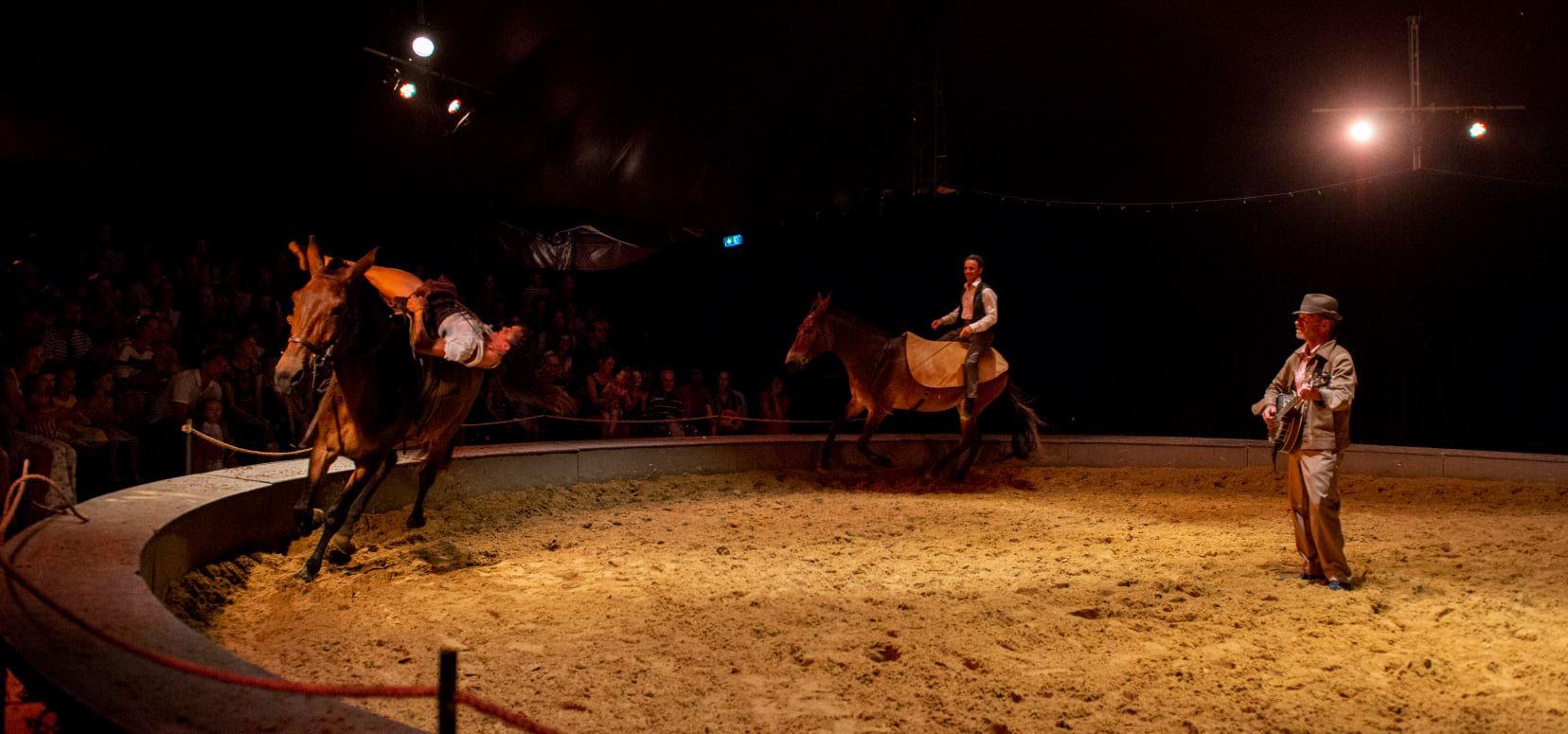 Voltige sur mule 2 .jpg