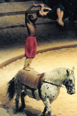 Zingaro - 1991