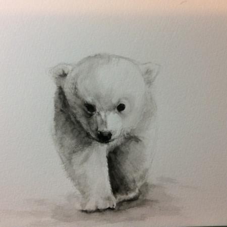 Arctic adventurer