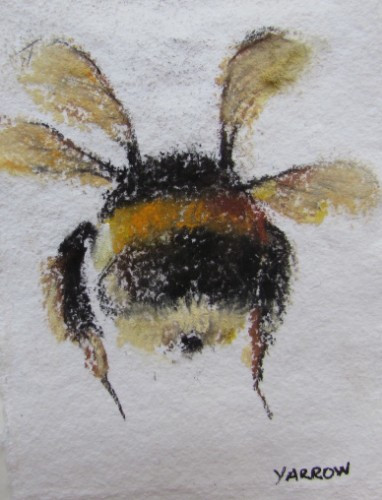 Bum of a Bumblebee
