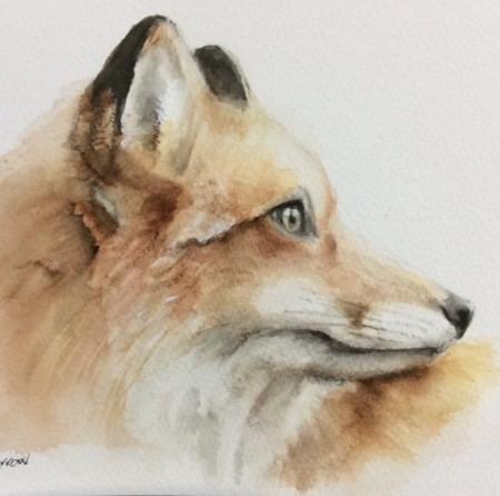 focussed fox