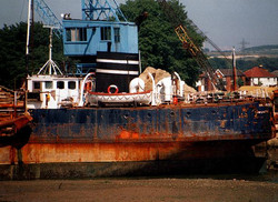 Coastal rust