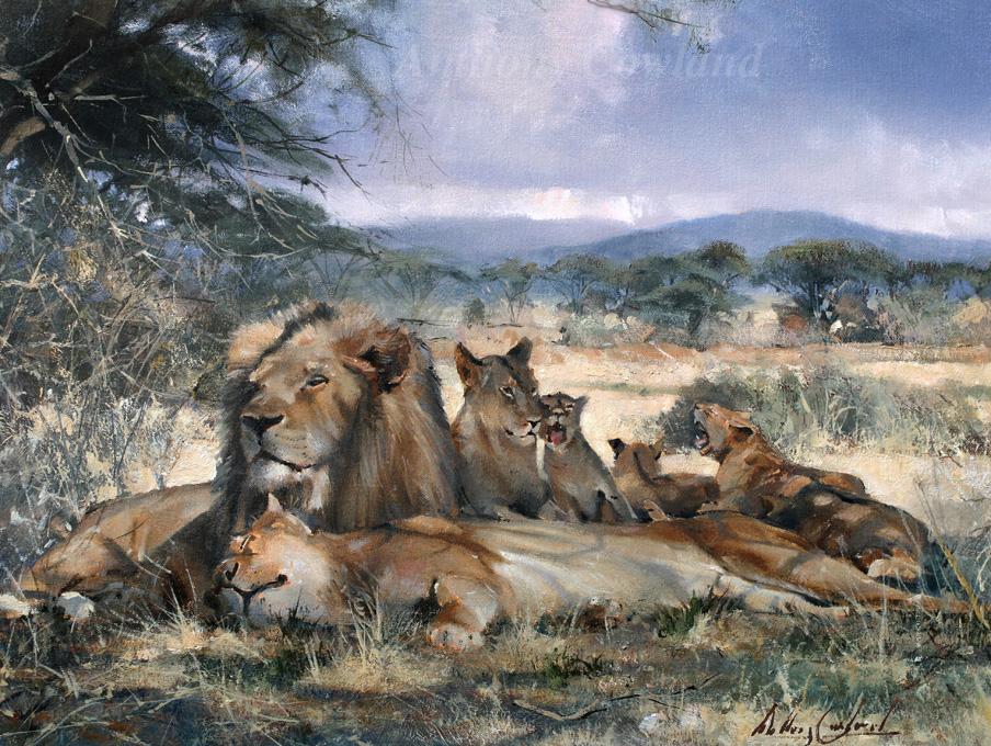 Pride of Lions, Kenya