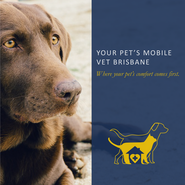 Your Pet's Mobile Vet: