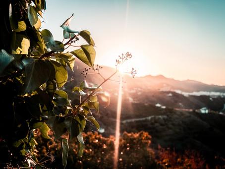 Creation & Grace: The Sheer Wonder of Delight