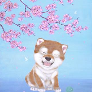 Shiba and Cherry Blossoms