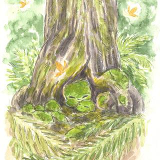 Forest Spirit - New Zealand