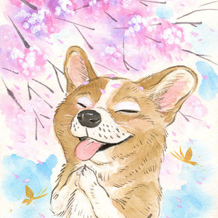 Sakura Wishes - Corgi