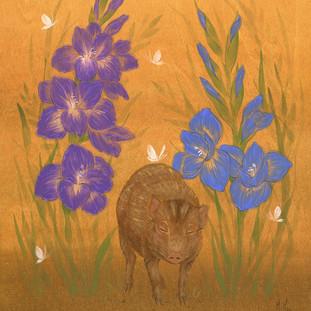 Pygmy Hog and Gladiolus