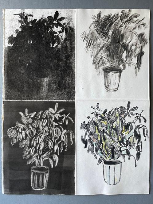 House Plant Print. Unique Floral Art Piece.