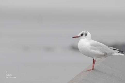A Bird on the Edge